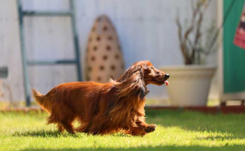 ペットに優しい庭づくり~愛犬のストレスがかからない庭とは